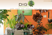 'DIG Gardens' - diggardensnursery_com